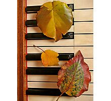 Autumn Leaf Trio on Piano Photographic Print