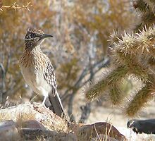 Road Runner-California by sunnykcdb