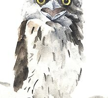 Tawny Frogmouth by Denise Faulkner