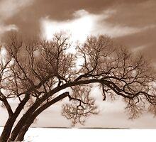 Winter storm by Janet Gosselin