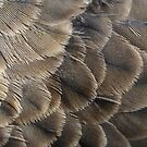 Pigeon feathers by BigAndRed