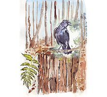 Crow loves the forest Photographic Print