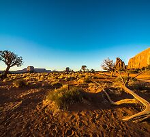 Monument Valley branch by Rob Hawkins