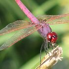 Dragonfly  by Sophie89