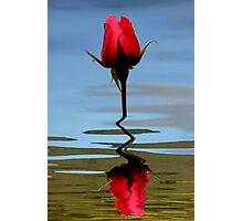 Reflection of Perfection Photographic Print