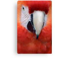 Scarlet Macaw Parrot, Ara macao Canvas Print