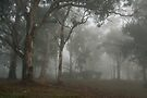 Trees in the Mist - Blakiston by LeeoPhotography