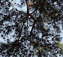 Coniferous Canopy by Joanna Wu
