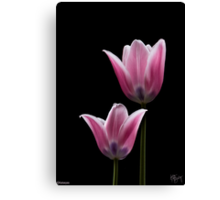 PINK TULIPS 3 Canvas Print