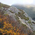 bright hillside by Cradle Mt  by gaylene