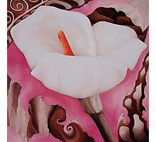 White Calla Lily Photographic Print
