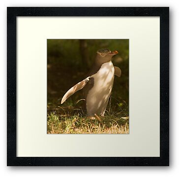 The rare yellow eyed penguin by Elana Bailey