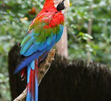 red and green macaw parrot by Jan Prchal