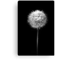 Midnight Wish Canvas Print