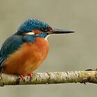 Kingfisher - I (Alcedo atthis) by Peter Wiggerman