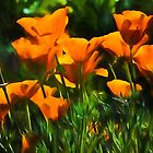 Brilliant Orange California Poppies - Impressions of Desert Spring by Georgia Mizuleva