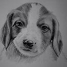 Puppy by jansimpressions