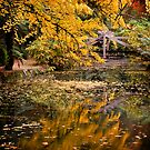 Autumnal Scene by prbimages