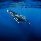 Baby whale by Carlos Villoch