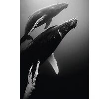 Humpback whales Photographic Print
