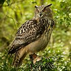 eagle owl by cazjeff1958