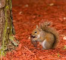 Squirrel at the Marriott by ShaneG