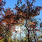 Autumn Afternoon by elasita