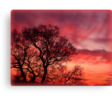 Love from the Sky Canvas Print