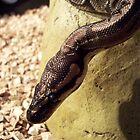 Python by mailorderchild
