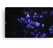 The Glowing Mushrooms Canvas Print