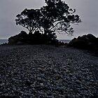 lonely tree on a stony beach by Mark Reed
