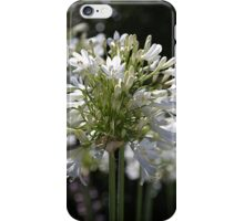 White Bright Agapanthus iPhone Case/Skin