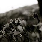 b&w by NIC1D