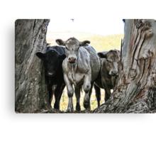 The Three Cows Canvas Print