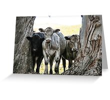 The Three Cows Greeting Card