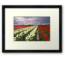 Storm over Tulips Framed Print