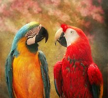 Animal - Parrot - We'll always have parrots by Mike  Savad