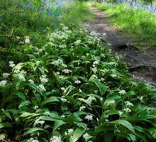 Ramsons and Bluebells by Ann Garrett