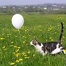 Jasper Cat and the White Balloon by Angela Harburn
