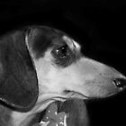 Weenie Profile by Sarah Jackson