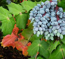 Oregon Grape by John Ayo