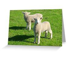 Mirroring Lambs Greeting Card