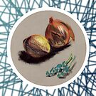 Onions by Alan Hogan