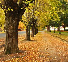 Autumn in Beechworth by Darren Stones