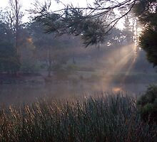 Fog over Ringwood Lake by lettie1957