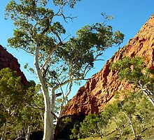 Simpsons Gap, Western Ranges, Alice Springs, Northenr Territory, Australia by Peter Clements