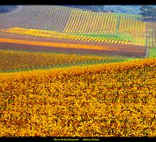 Golden vines by Andrew Wilson