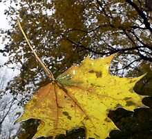 Fallen Leaf by LynnMarie