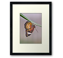 Leopard Lacewing Framed Print