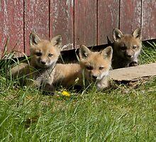 Foxy by Jessica Jones